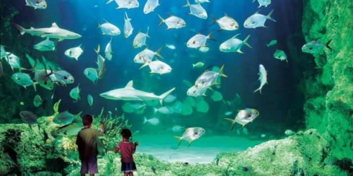 Cara Membuat Aquarium Laut